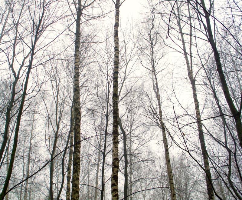 Februar-Waldung im Nebel lizenzfreies stockbild