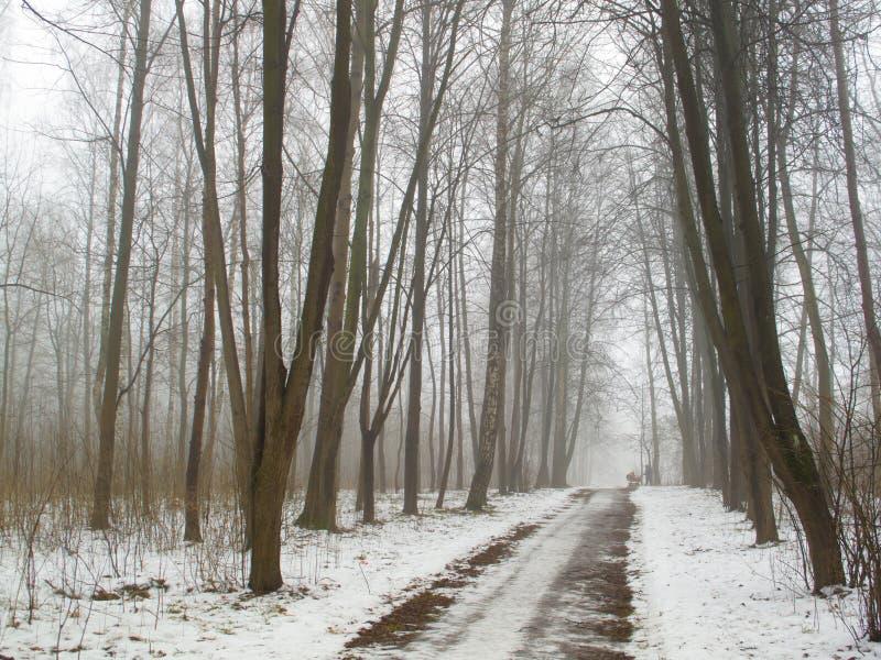 Februar-Waldung im Nebel und in der Straße stockfotos