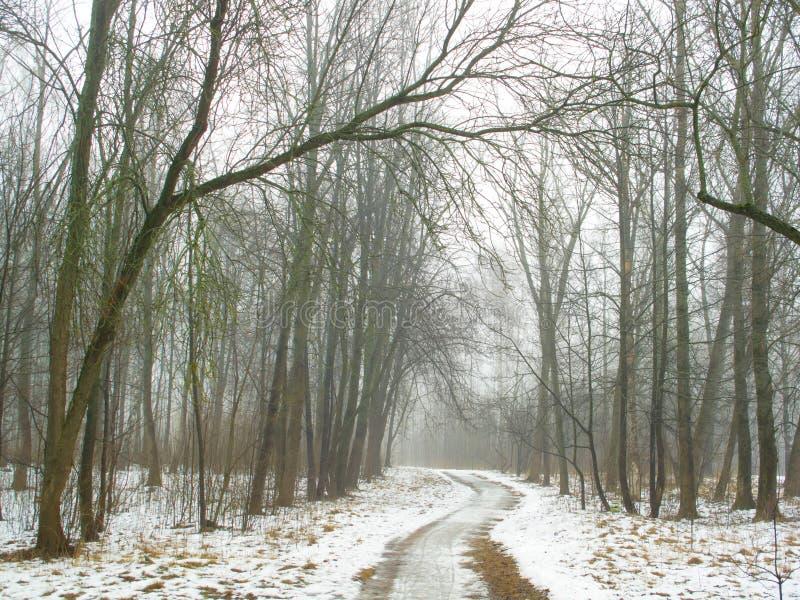 Februar-Waldung im Nebel und in der Straße lizenzfreies stockfoto