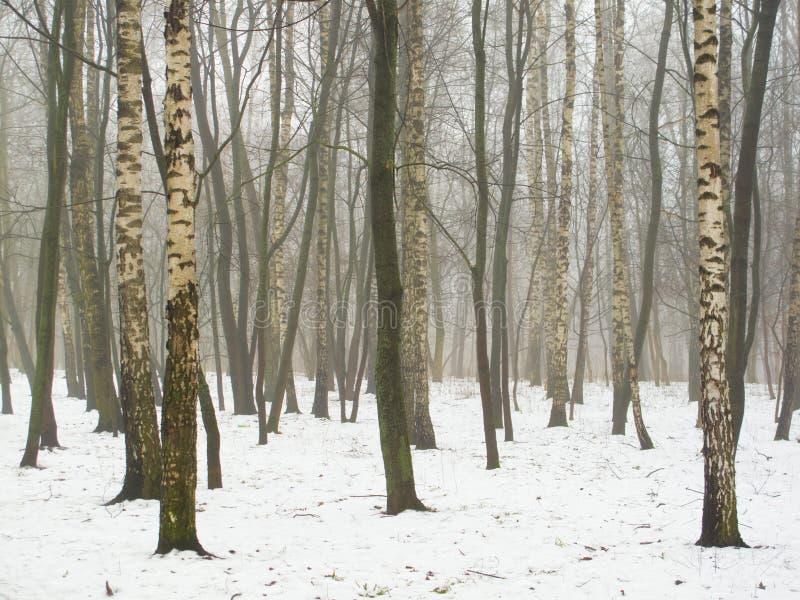 Februar-Waldung im Nebel und im Schnee lizenzfreie stockfotografie