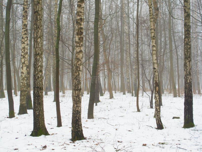 Februar-Waldung im Nebel und im Schnee lizenzfreies stockbild