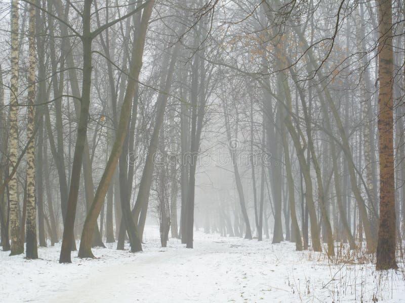 Februar-Waldung im Nebel und im Schnee lizenzfreie stockfotos