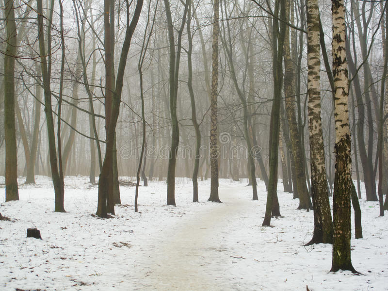 Februari-bosje in mist en sneeuw stock foto