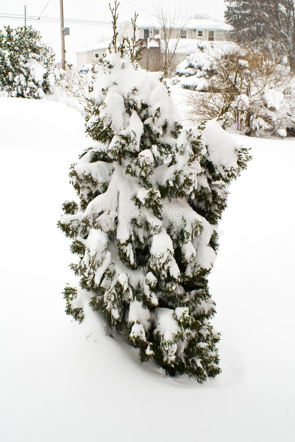 Download February 2010 Storm stock photo. Image of early, entire - 12932370