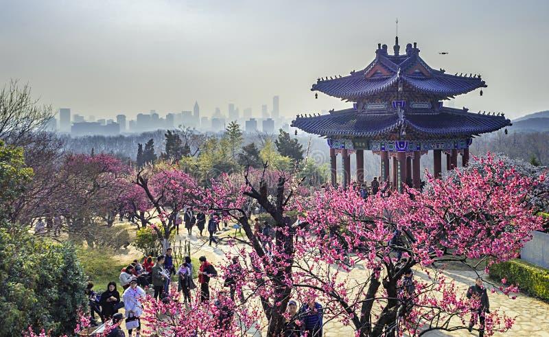 Aerial photography - Meihuashan Wanmu Meiyuan royalty free stock photos