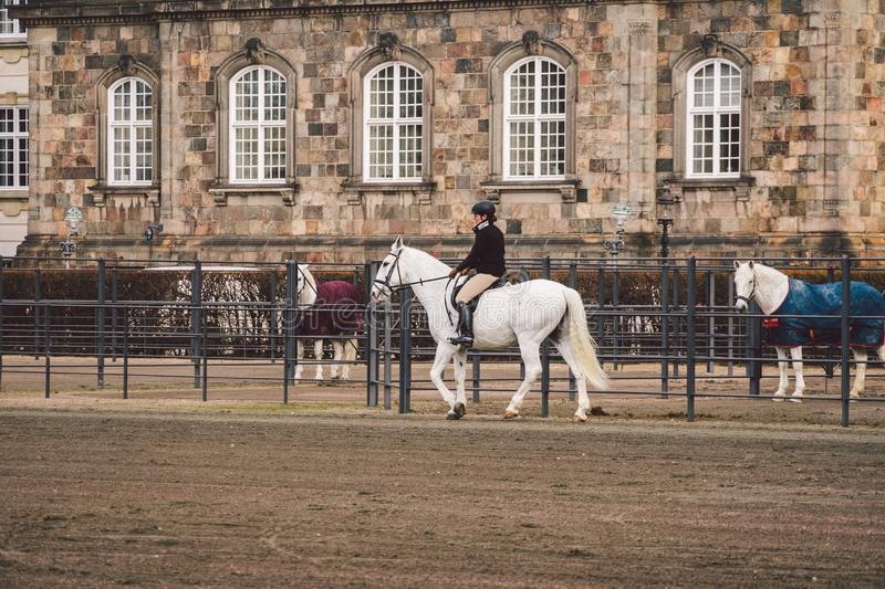 February 20, 2019. Denmark. Copenhagen. Training bypass Adaptation of a horse in the royal stable of the castle Christiansborg stock images