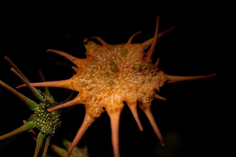 Fechar a foto de cactus com fundo escuro fotos de stock royalty free