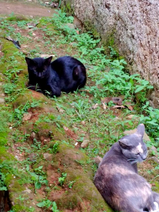 Fechas de los gatos imagen de archivo libre de regalías
