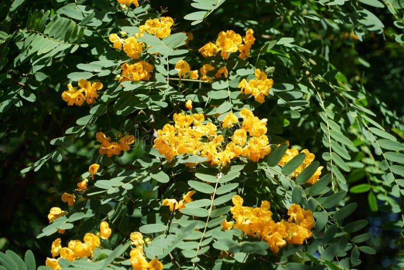 Feche acima com as flores espec?ficas de Madeira imagem de stock royalty free