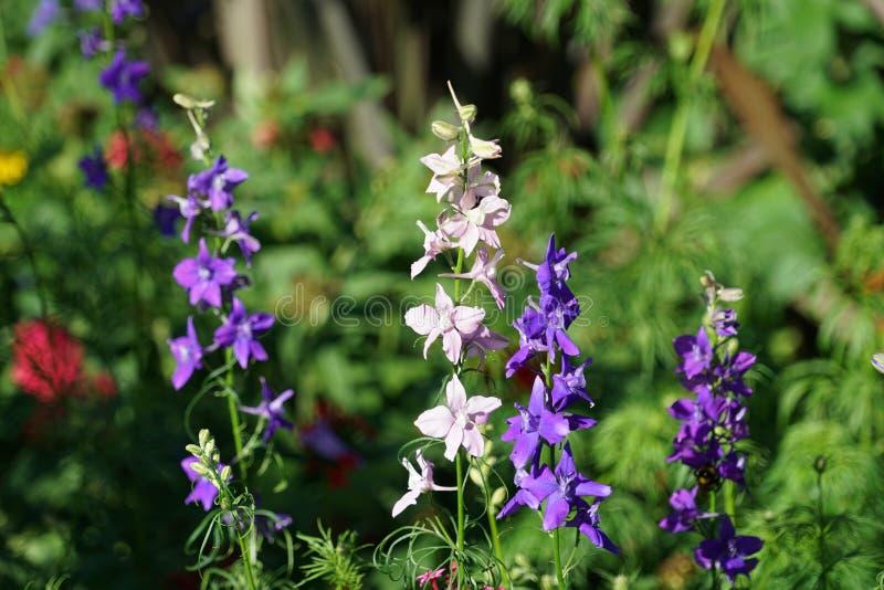 Feche acima com as flores espec?ficas de Madeira fotos de stock royalty free