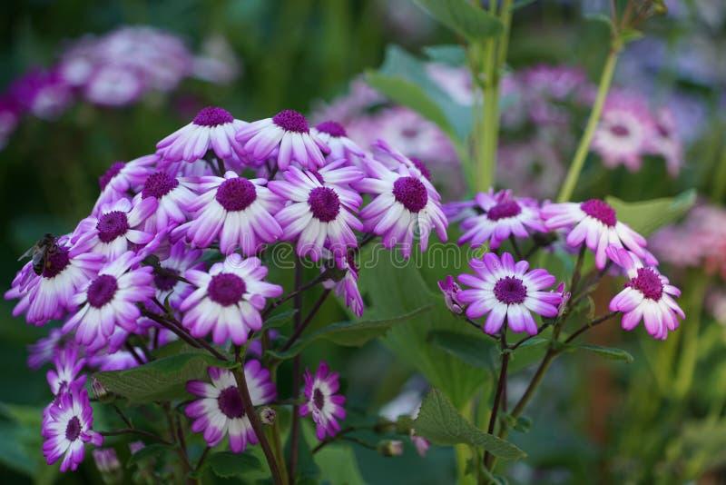 Feche acima com as flores espec?ficas de Madeira imagens de stock