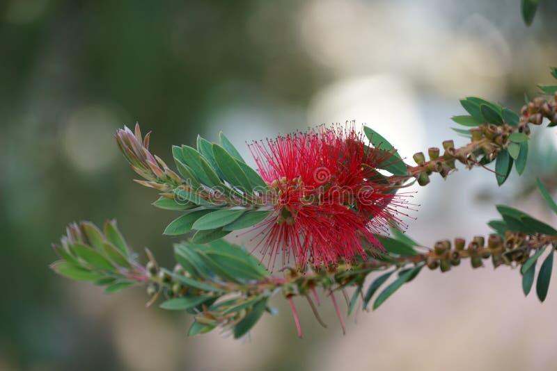 Feche acima com as flores espec?ficas de Madeira imagens de stock royalty free