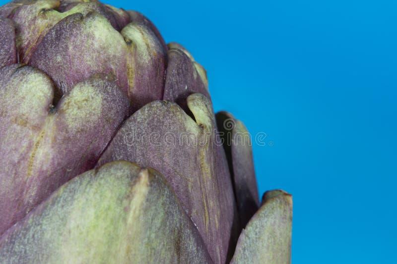 Feche acima da alcachofra roxa no fundo azul fotografia de stock royalty free