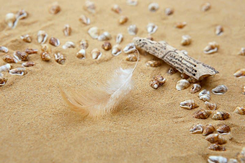 Feche acima da areia da praia com shell, a pena e madeira lançada à costa minúsculos do mar fotos de stock royalty free