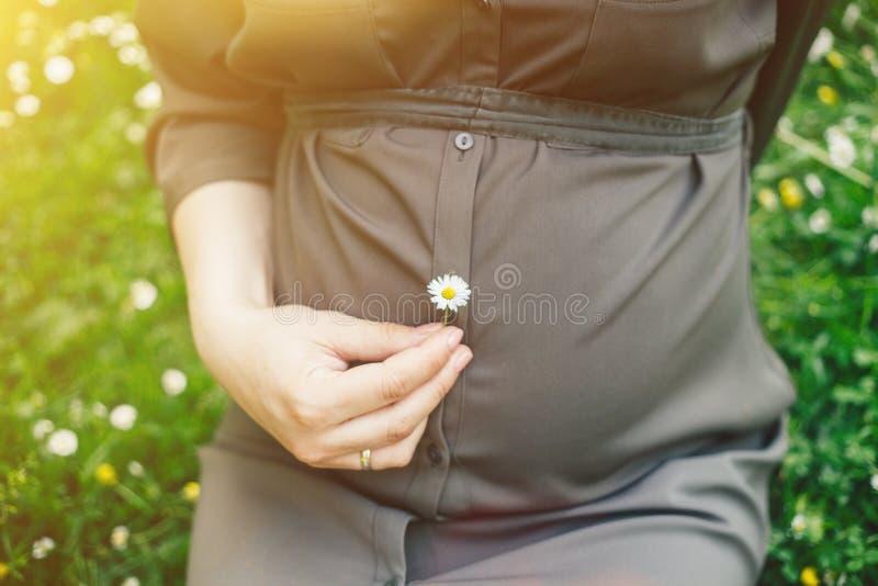 Feche acima da barriga de uma mulher gravida que guarda uma flor da margarida em um parque do ver?o imagem de stock