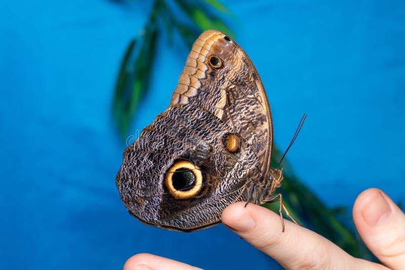 Feche acima da borboleta na m?o da mulher Beleza da natureza fotos de stock royalty free