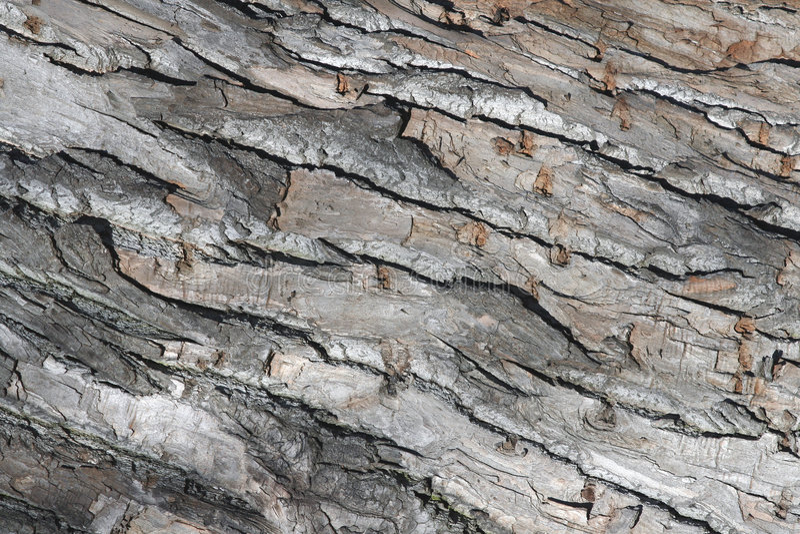 Feche acima da casca de árvore fotografia de stock royalty free
