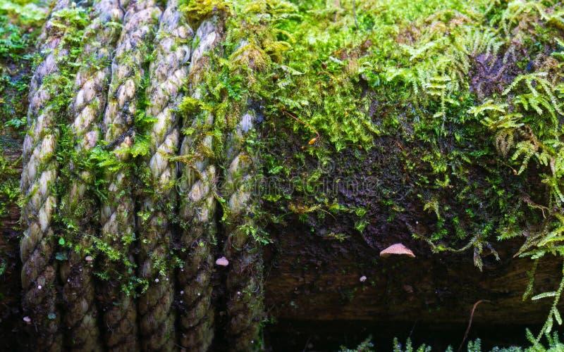 Feche acima da corda e do musgo em uma coluna de madeira dos caminhos no imagem de stock royalty free