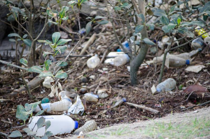 Feche acima da descarga de desperdícios em uma floresta dos manguezais imagem de stock royalty free