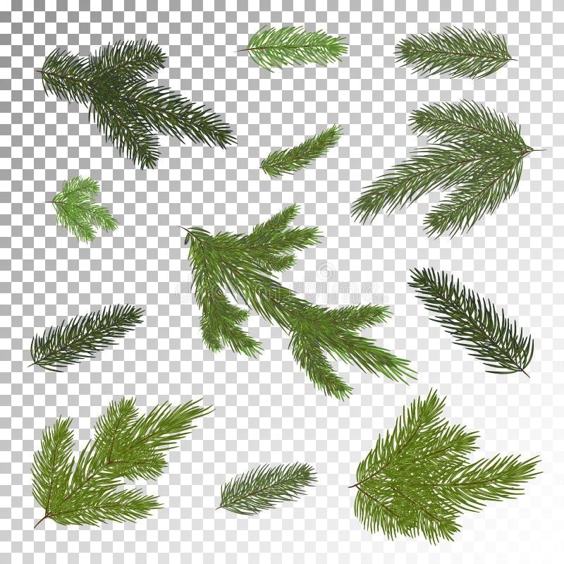 Feche acima da filial de árvore do abeto isolada Ilustração do vetor eps 1 ilustração royalty free