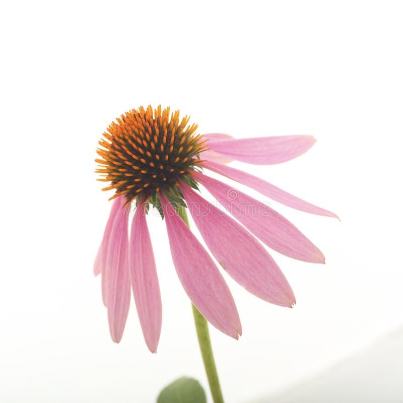 Feche acima da flor imagem de stock
