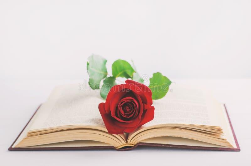 Feche acima da flor da rosa do vermelho no livro velho aberto com tom do vintage foto de stock royalty free