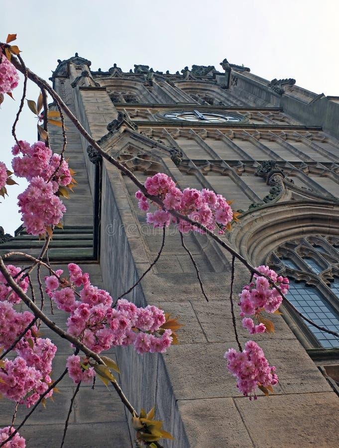 Feche acima da flor de cerejeira na frente da torre da igreja de leeds anteriormente a igreja paroquial na primavera foto de stock