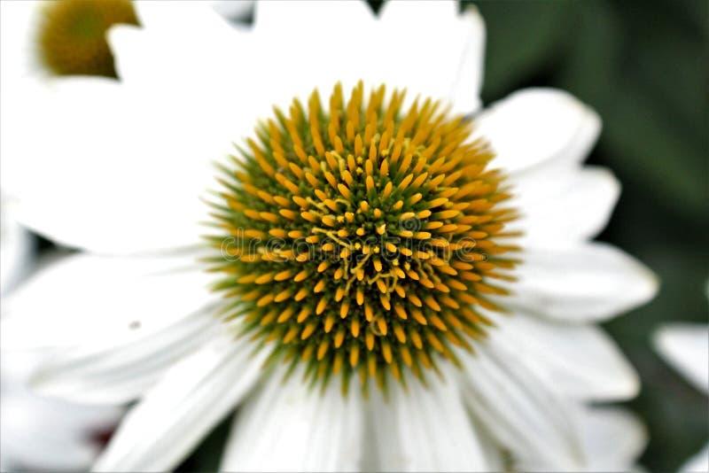 Feche acima da flor da mola fotos de stock royalty free