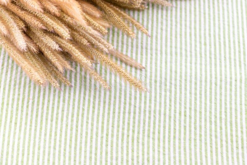 Feche acima da flor seca do Pennisetum na tabela com tablecl verde da tira foto de stock royalty free