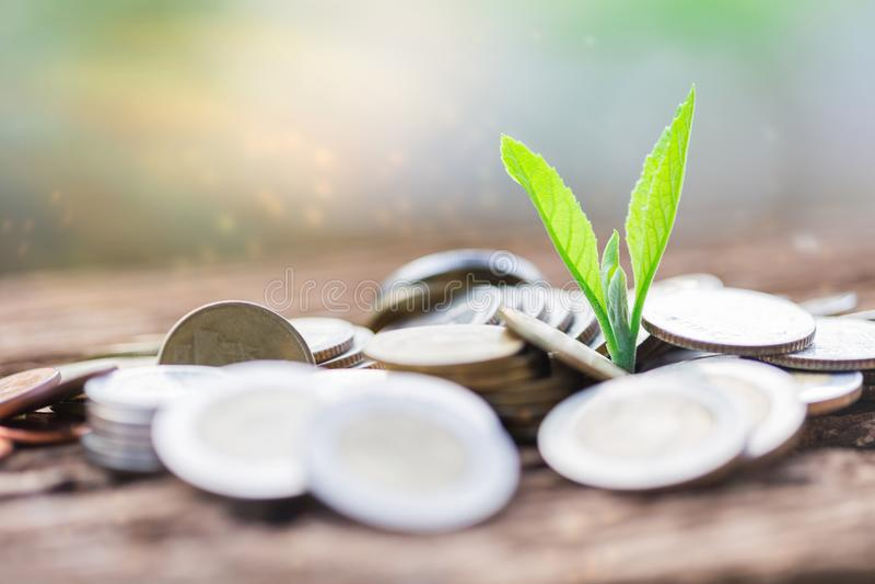 Feche acima da folha e das moedas do crescimento imagem de stock