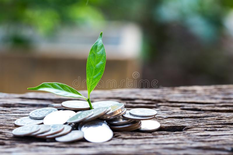 Feche acima da folha em moedas do crescimento ou do investimento para lucrar a finança fotos de stock royalty free