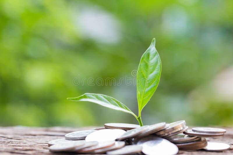 Feche acima da folha em moedas do crescimento ou do investimento para lucrar a finança imagens de stock