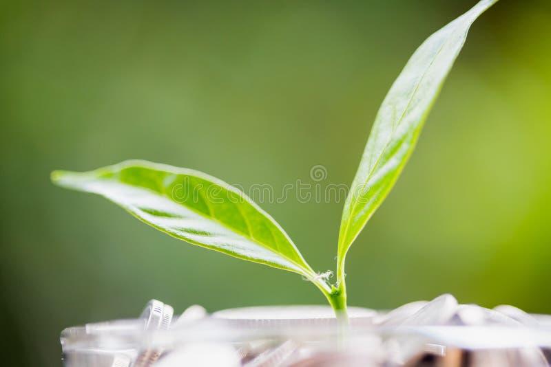 Feche acima da folha em moedas do crescimento ou do investimento para lucrar a finança foto de stock