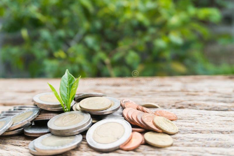 Feche acima da folha em moedas do crescimento ou do investimento para lucrar a finança imagens de stock royalty free