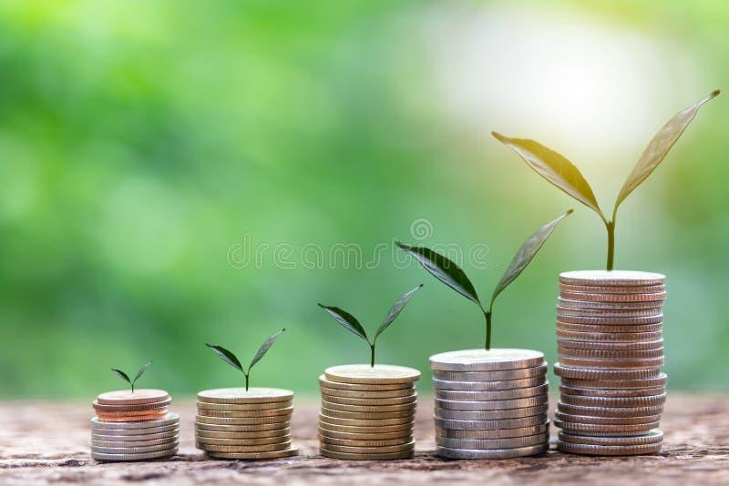 Feche acima da folha em moedas do crescimento ou do investimento para lucrar a finan?a foto de stock