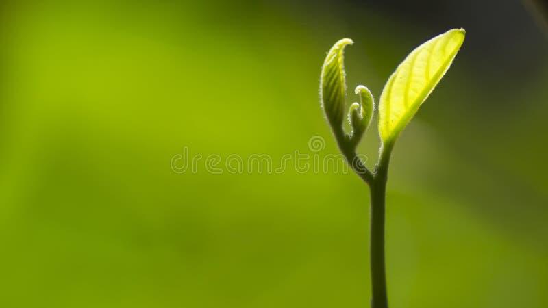 Feche acima da folha nova com fundo do borrão e fonte da luminosidade reduzida fotografia de stock