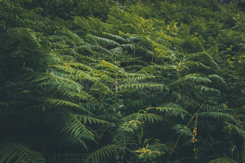 Feche acima da folha tropical do verde da natureza foto de stock royalty free