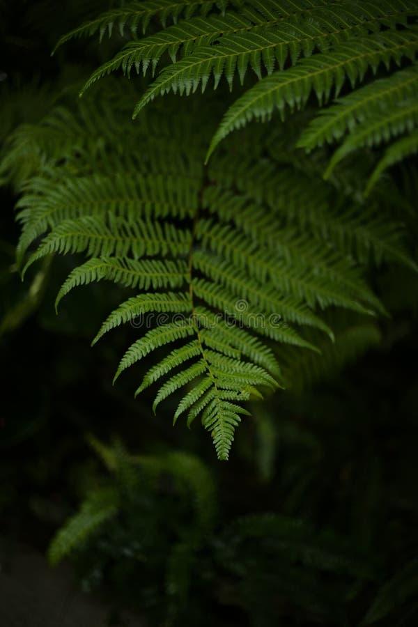 Feche acima da folha verde bonita fotografia de stock