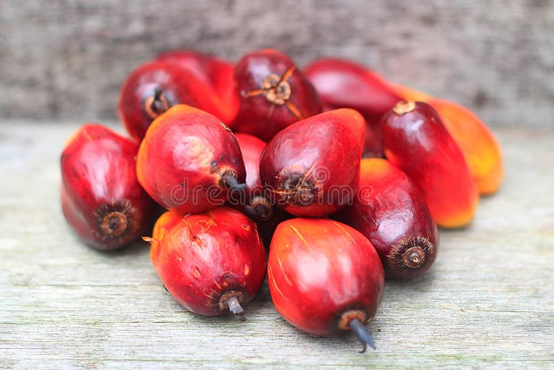 Feche acima da foto da semente fresca da palma de óleo fotos de stock
