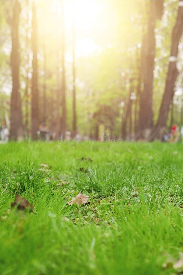 Feche acima da grama verde imagem de stock
