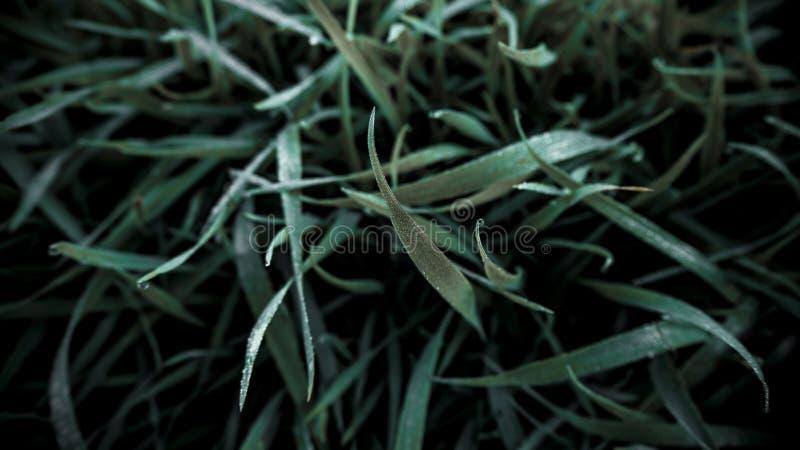 Feche acima da grama verde fresca com orvalho no alvorecer fotos de stock