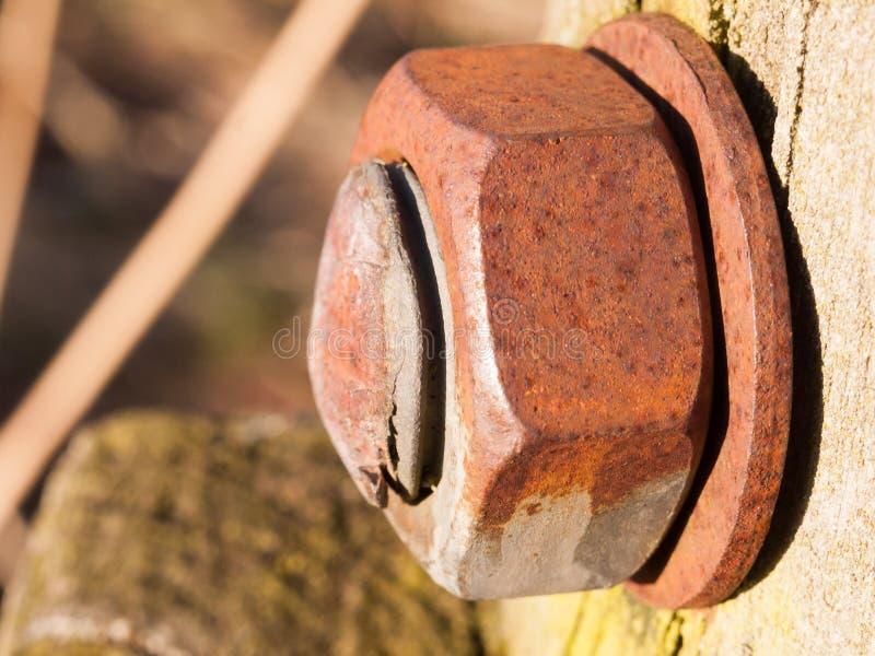 feche acima da grande cabeça oxidada do parafuso e do parafuso foto de stock royalty free