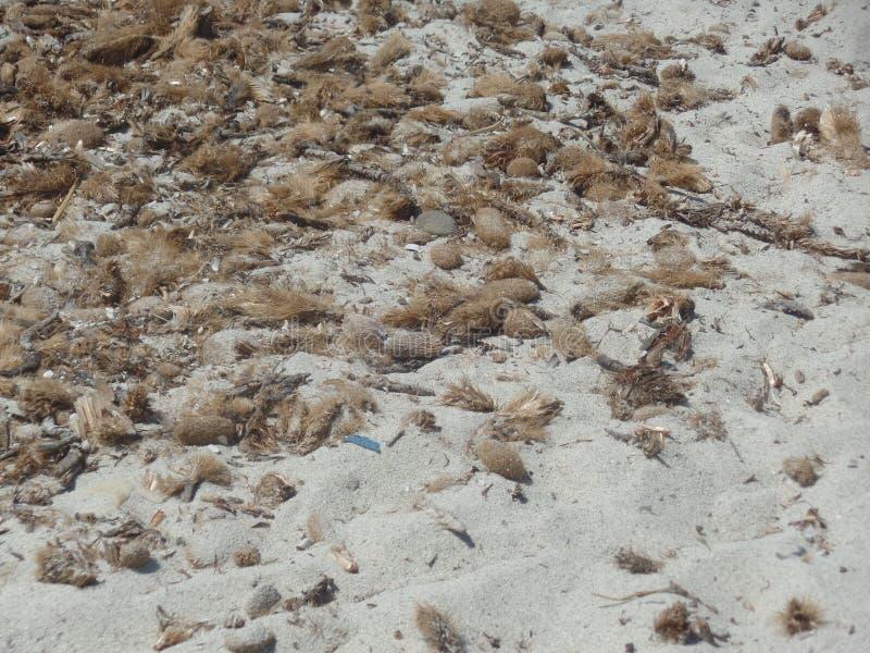 Feche acima da imagem das praias selvagens de Sardinia foto de stock