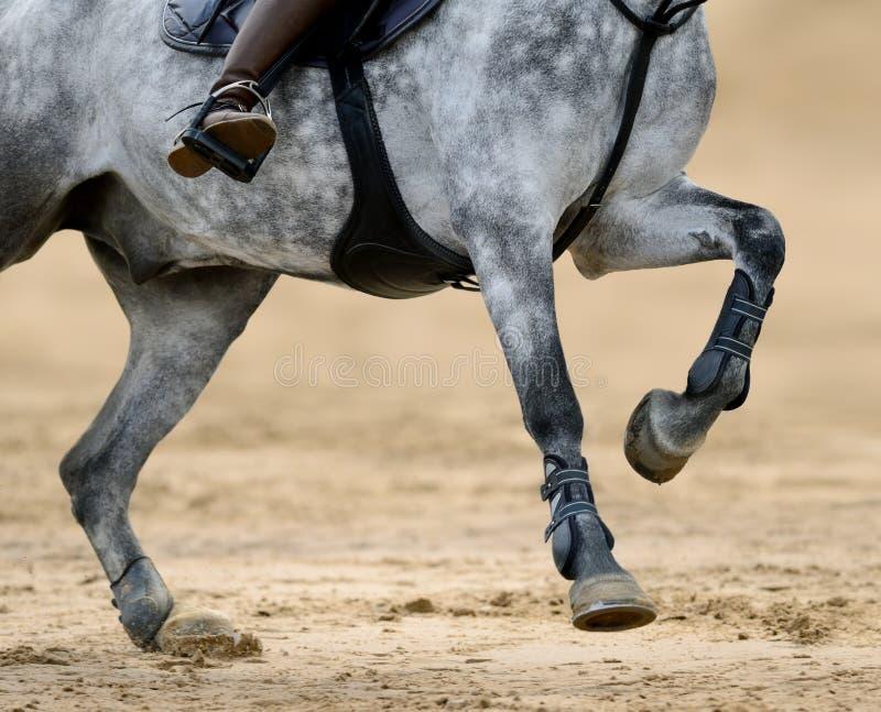 Feche acima da imagem dos pés do cavalo na competição de salto de mostra foto de stock