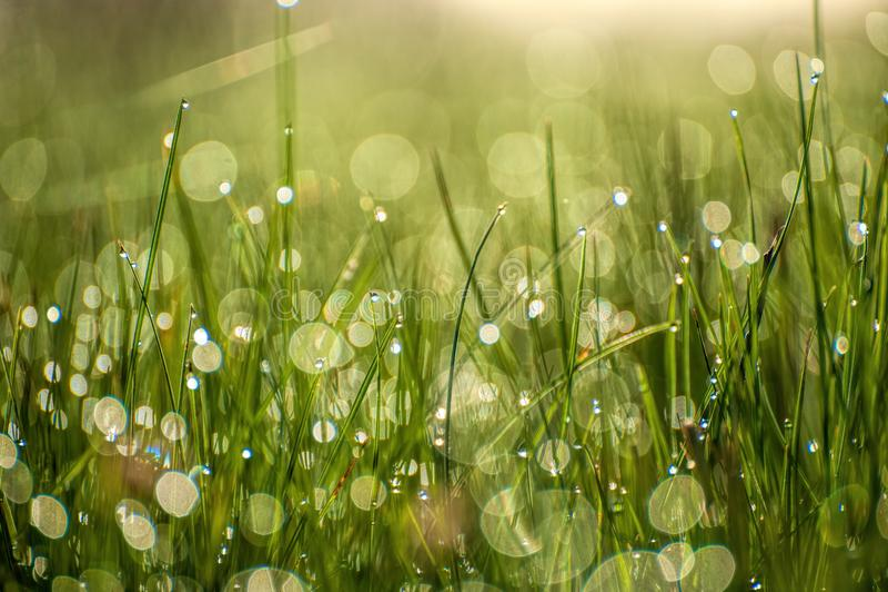 Feche acima da imagem macro da luz brilhante - grama verde que cresce no fundo verde borrado do bokeh na manhã ensolarada da mola imagens de stock royalty free