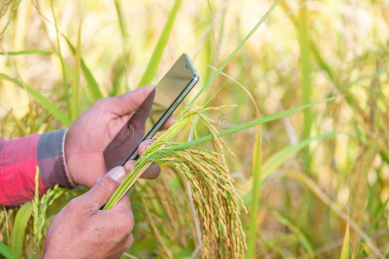 Feche acima da mão do fazendeiro usando o telefone celular ou a tabuleta que estão em fotografia de stock royalty free
