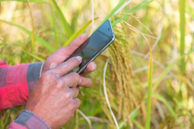 Feche acima da mão do fazendeiro usando o telefone celular ou a tabuleta que estão em fotos de stock royalty free
