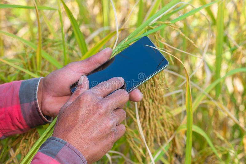 Feche acima da mão do fazendeiro usando o telefone celular ou a tabuleta que estão em fotografia de stock