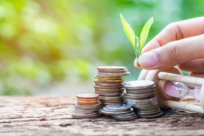 Feche acima da mão que põe a folha sobre o empilhamento de moedas do crescimento foto de stock royalty free