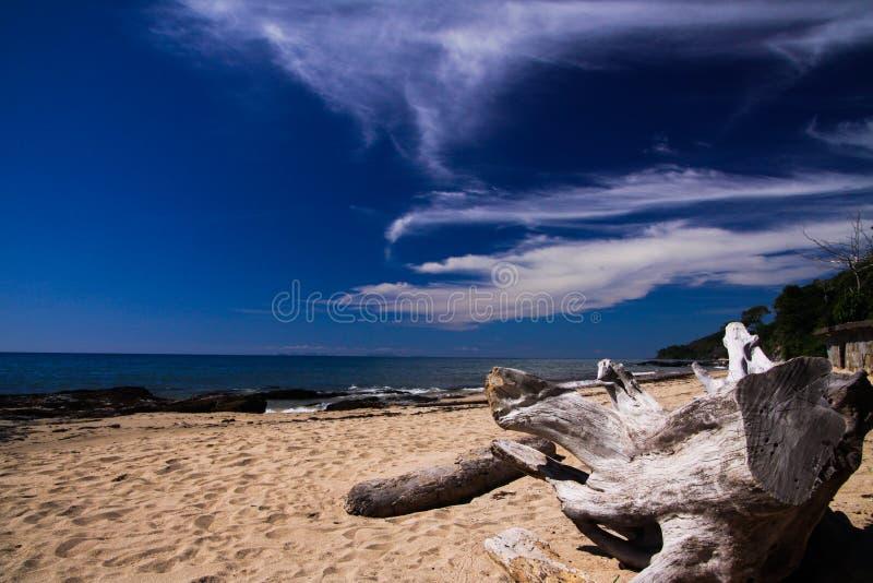 Feche acima da madeira lançada à costa contra o céu azul na praia só na ilha tropical Ko Lanta, Tailândia imagens de stock